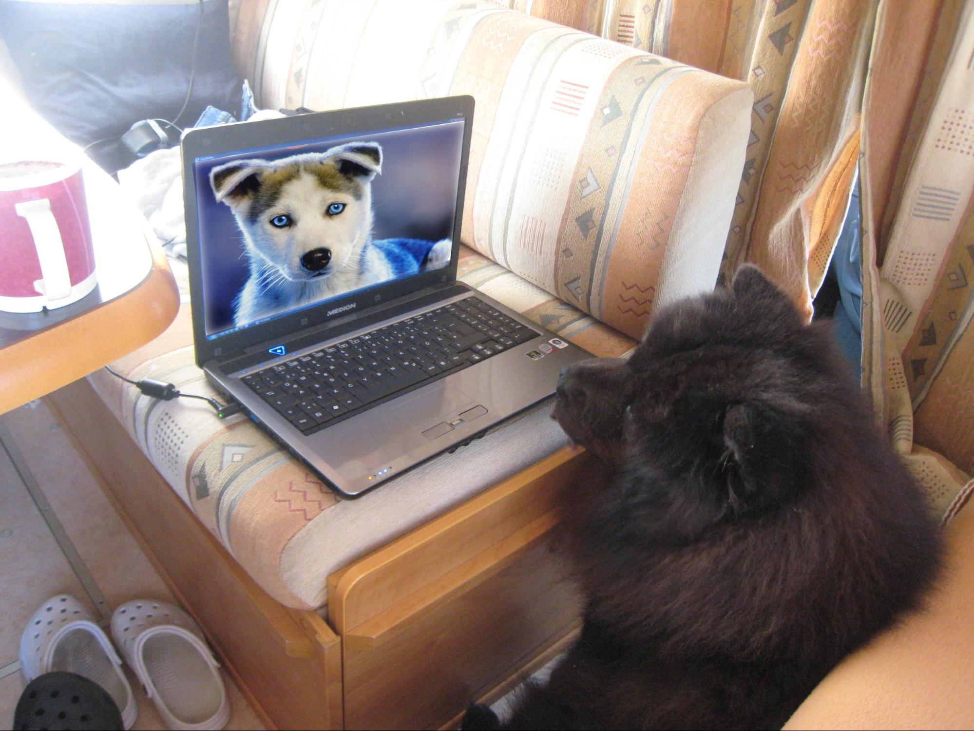 a dog video-chatting with another dog.