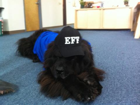Kodi rocking at EFF hat