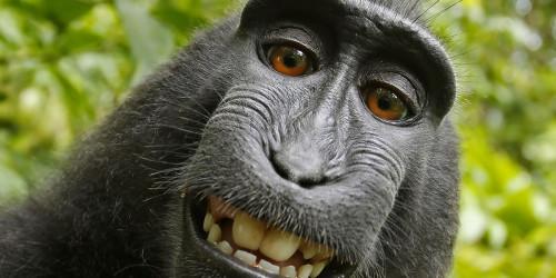 Public Domain monkey